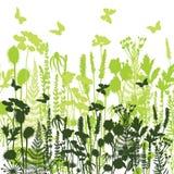 Dekorativa ängkonturer av lösa olika växter, blommor Arkivfoto