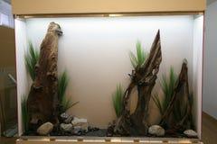 Dekorativa akvariumdrivved och stenar royaltyfria bilder