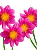 dekorativa blommor Royaltyfria Bilder