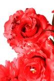 dekorativa blommor Arkivbilder