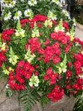 dekorativa blommor Royaltyfri Fotografi