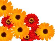 dekorativa blommor Arkivfoto