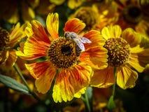 dekorativa blommor Fotografering för Bildbyråer