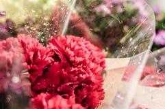 Dekorativa blommor efter regn i den Cinarcik staden - Turkiet Royaltyfri Fotografi