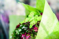 Dekorativa blommor efter regn i den Cinarcik staden - Turkiet Royaltyfri Bild