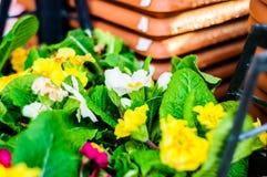 Dekorativa blommor efter regn i den Cinarcik staden - Turkiet Fotografering för Bildbyråer
