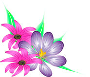 Dekorativa blommor för bukett Arkivbild