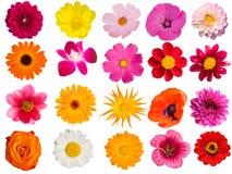 dekorativa blommor för samling Arkivbild