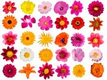 dekorativa blommor för samling Royaltyfria Foton