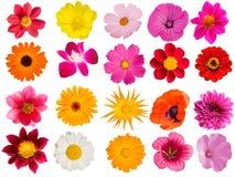 dekorativa blommor för samling Arkivbilder