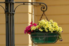 Dekorativa blommor i en kruka Royaltyfria Bilder