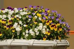 Dekorativa blommor i en kruka Royaltyfri Fotografi