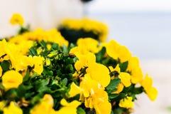 Dekorativa blommor i ingång av den rörande kiosket för Ataturk ` s Arkivfoto