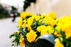 Dekorativa blommor i ingång av den rörande kiosket för Ataturk ` s Royaltyfria Foton
