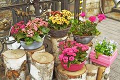 Dekorativa blommor i krukor Arkivfoton