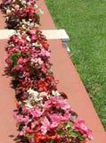 Dekorativa blommor och äng Royaltyfri Bild
