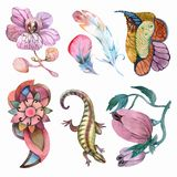 Dekorativa blommor och beståndsdelar Fotografering för Bildbyråer