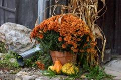 Dekorativa blommor och gul pumpa arkivbild