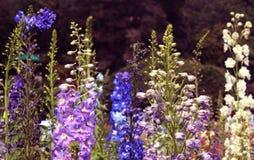 Dekorativa blommor och knoppar Fotografering för Bildbyråer