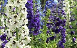 Dekorativa blommor och knoppar Arkivfoton