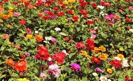 Dekorativa blommor och knoppar Royaltyfri Fotografi