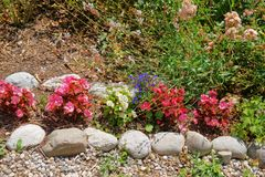 Dekorativa blommor på den inre gården av Yverdon i Schweiz Royaltyfria Bilder