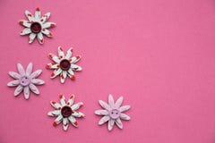 Dekorativa blommor på en rosa bakgrund Arkivfoton