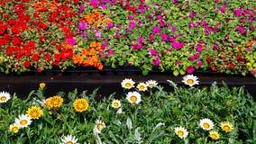 Dekorativa blommor på försäljning Royaltyfri Bild