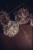 Dekorativa blommor på pastellpapper Arkivfoto