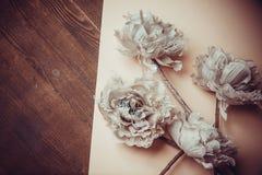 Dekorativa blommor på pastellpapper Fotografering för Bildbyråer