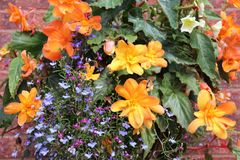 Dekorativa färgrika blommor i Augusti fotografering för bildbyråer