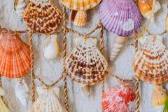 Dekorativa färgrika snäckskal som hänger på en vit vägg Royaltyfria Bilder