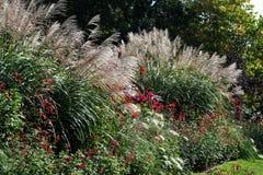 Dekorativa gräs när blom Arkivfoton