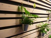 Dekorativa gröna växter i hängda krukor Royaltyfri Fotografi