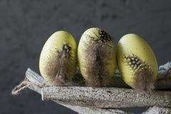 Dekorativa gula påskägg med fjädrar fattar på, mot grå bakgrund royaltyfri fotografi