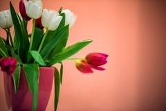 Dekorativa härliga tulpan i den keramiska krukan Royaltyfri Foto