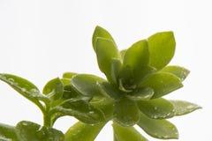 Dekorativa hemväxter och blommor Arkivbilder