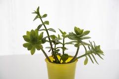 Dekorativa hemväxter och blommor Arkivfoto