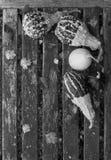 Dekorativa kalebasser med nedgångsidor på en lantlig bänk arkivbild