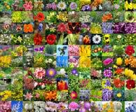 Dekorativa kultiverade blommor collage Royaltyfri Fotografi
