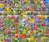 Dekorativa kultiverade blommor collage Arkivbild