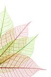 dekorativa leaves Arkivbilder