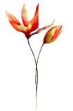 Dekorativa liljablommor Royaltyfria Foton