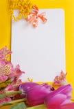 dekorativa mimosatulpan för kort Fotografering för Bildbyråer