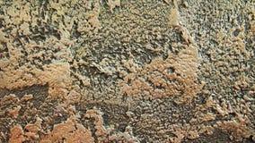 Dekorativa murbrukar för bakgrunder Royaltyfria Bilder