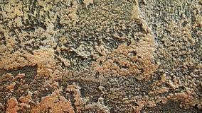 Dekorativa murbrukar för bakgrunder Arkivbild