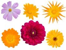 dekorativa olika blommor Arkivbild
