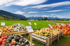 Dekorativa orange pumpor på skärm på bönderna marknadsför i Tyskland Guling-gräsplan randiga dekorativa pumpor på självbetjäning  Arkivfoto