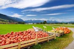 Dekorativa orange pumpor på skärm på bönderna marknadsför i Tyskland Guling-gräsplan randiga dekorativa pumpor på självbetjäning  Royaltyfri Fotografi
