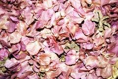 Dekorativa rosa kronblad Royaltyfri Foto